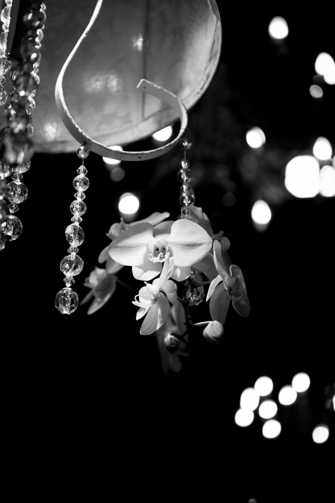 Romeo_Meagan_Nooitgedacht_Wedding-3